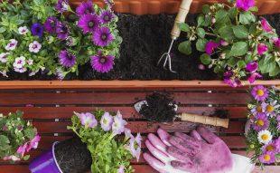balkon, balkonnövény, szoktatás