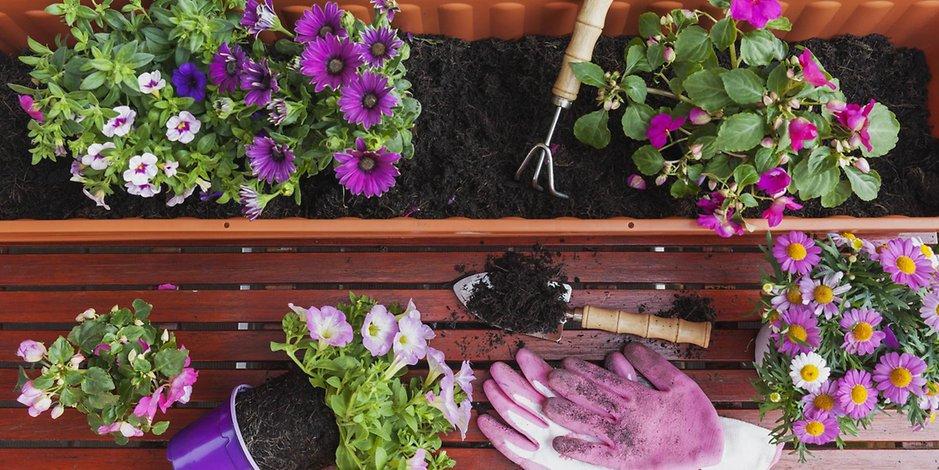 Új növények a balkonon. Mire ügyeljünk?