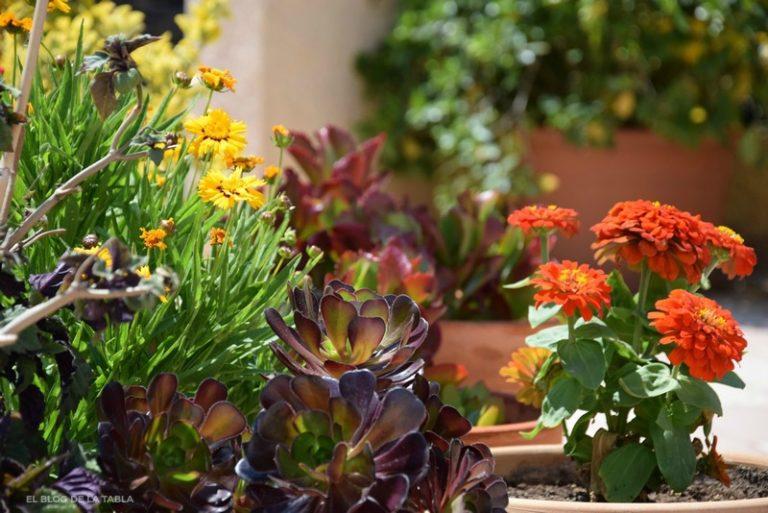 május, kert, virágok