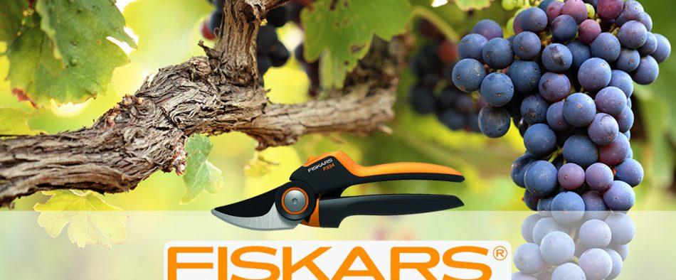 szőlő, metszés