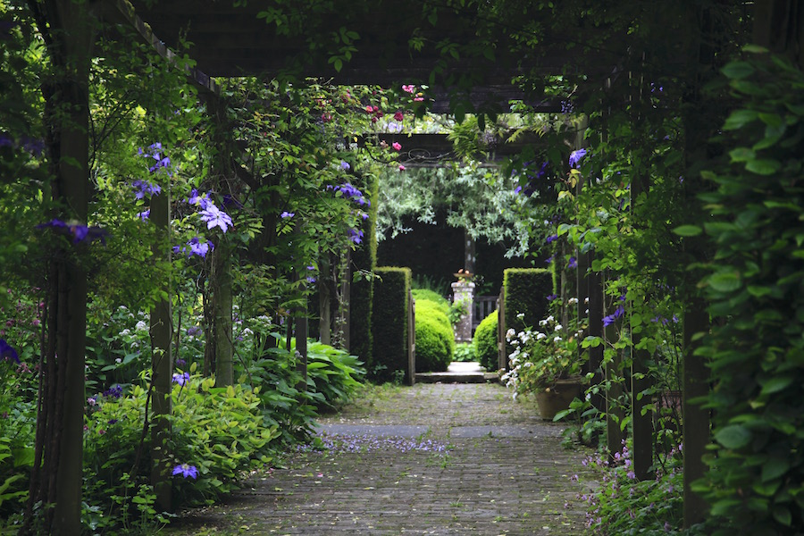 Mi kússzon a kertünkben? - 3. A csodás klemátisz