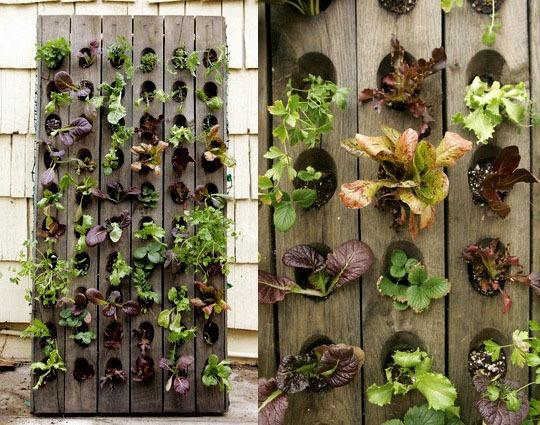vertikális saláta kert