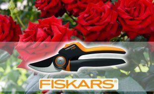 rózsa,metszés, Fiskars