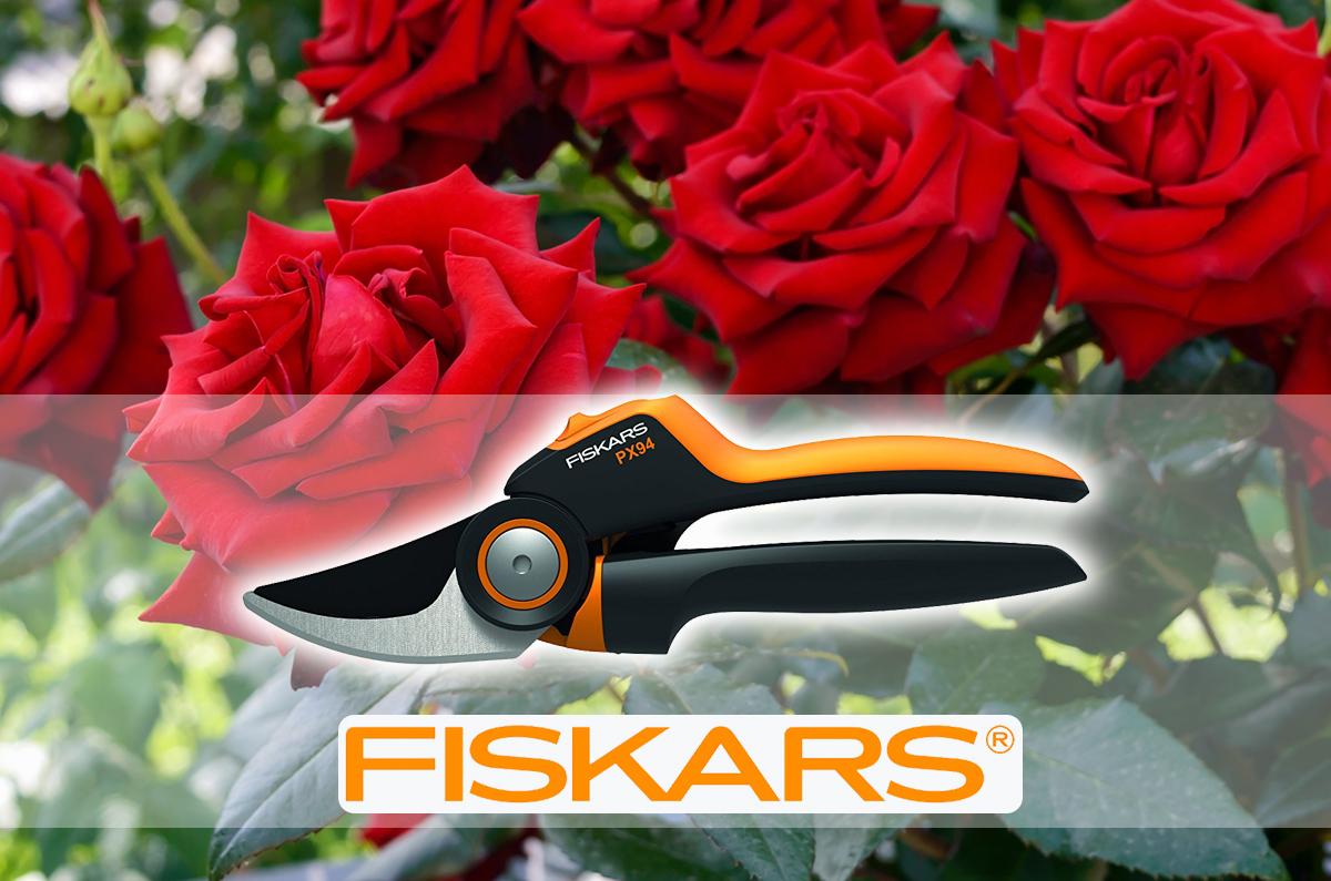 Hogyan kell metszeni a rózsát?