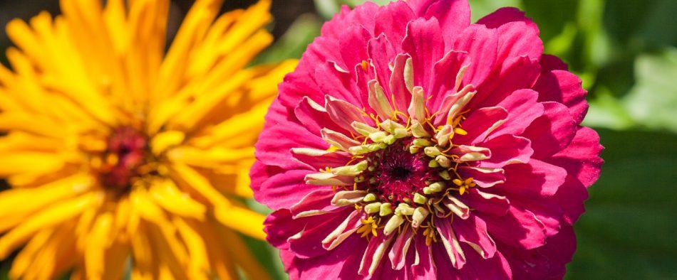 egynyári virágok tartása