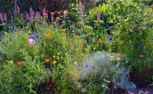 évelőágyás vadvirágokkal