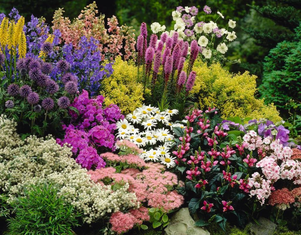 9 magas növésű, látványos évelő, melyeknek ott a helye a Te kertedben is!