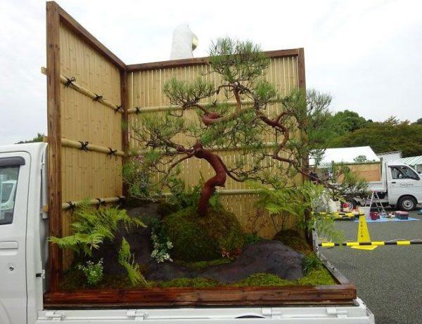 minikert bonzai fával