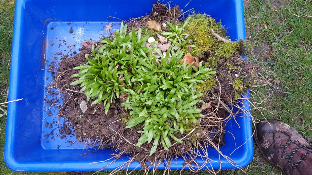 Dísznövények őszi szaporítása