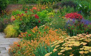 kerti évelők őszi szaporítása