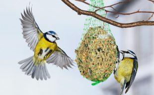 téli madáretetés