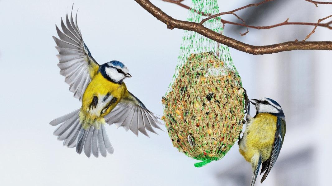 Téli madáretetés - csak helyesen!