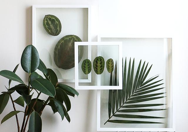 Hogyan készíts képkeretben lebegő préselt növény dekorációt? - videó
