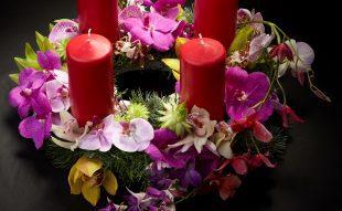 orchidea, kiállítás, advent