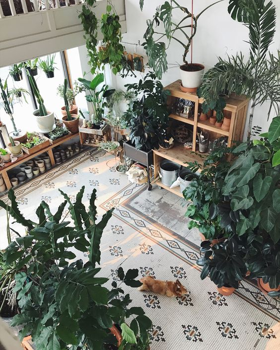 urban-dzsungel