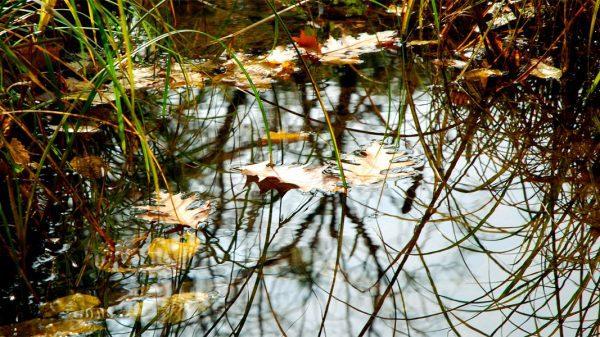 kerti tó, téliesítés, tisztítás