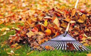 lomb, ősz, újrahasznosítás