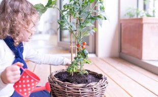 beltéri kertészkedés gyerekekkel