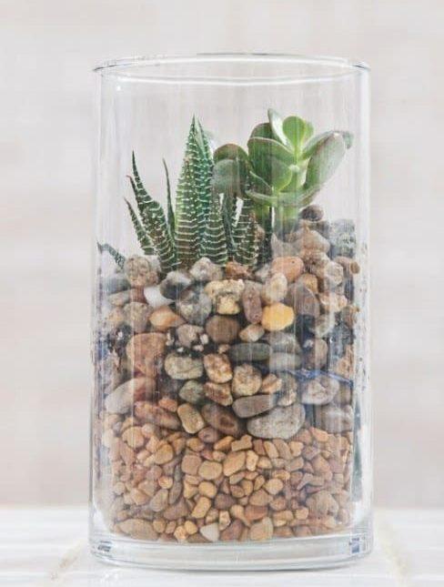 terrarium-florarium-palackkert