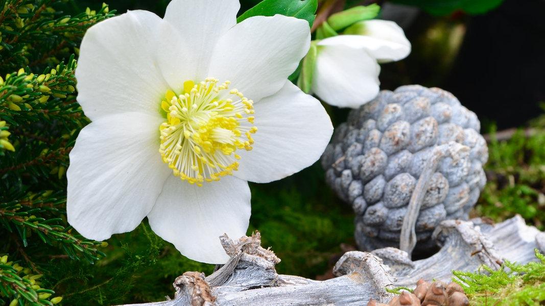 December: a beltéri kertészkedés kezdete. Tippek, ötletek az adventi időszakra