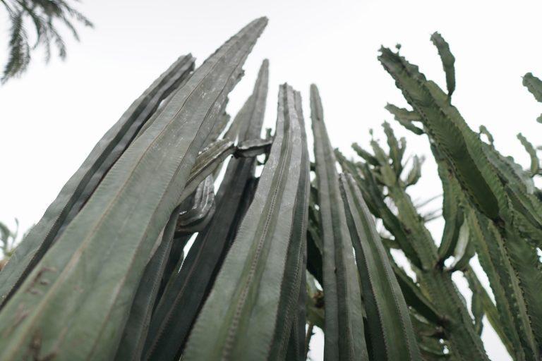 Elche-palmaliget