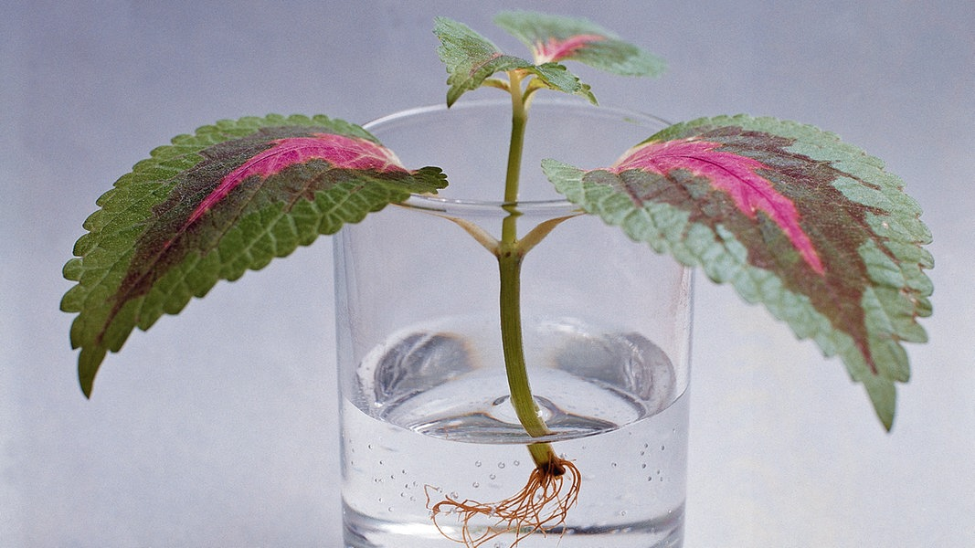 Növények szaporítása: hasznos tippek, praktikák növényeink gyökereztetéséhez