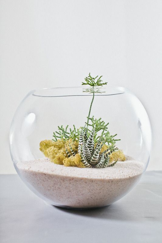 palackkert, florárium, minikert, pozsgás, sivatag