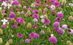 színes virág, virág, kert