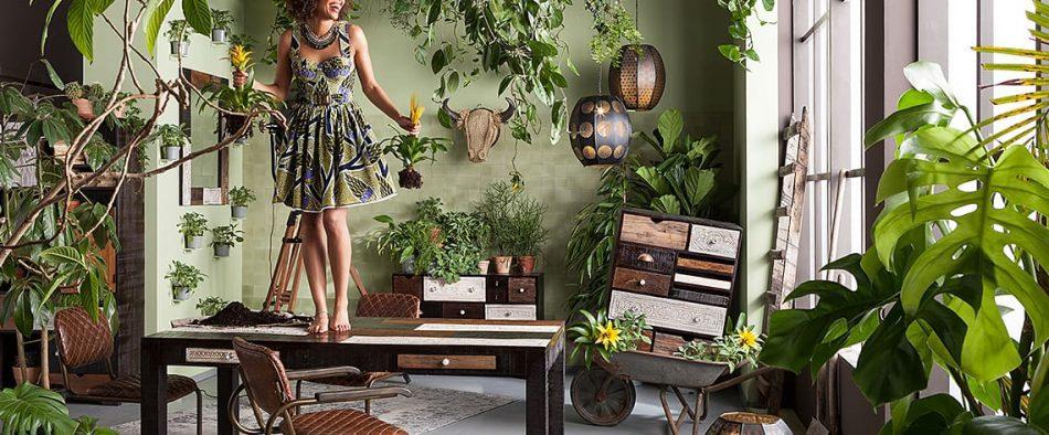 városi dzsungel, urban dzsungel, urban junglee, szobanövény