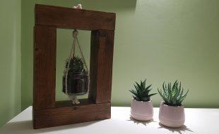 kaktusz, dekor