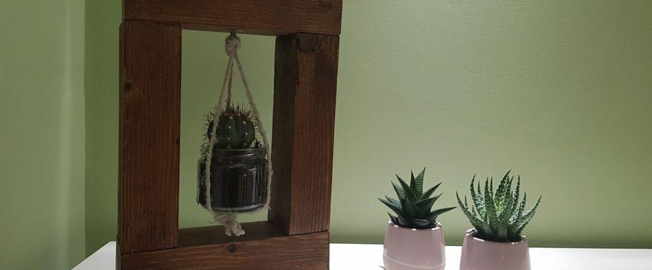 kaktusz-hinta