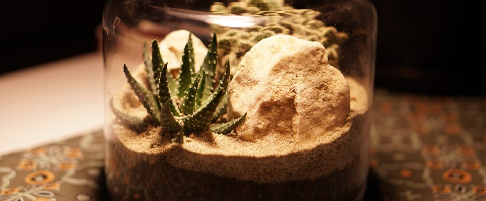 palackkert, sivatag, mini sivatag, plantárium