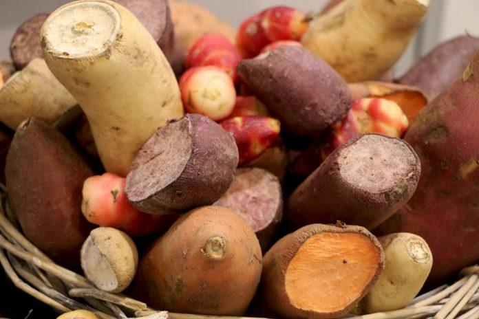 Hogyan termesszünk édesburgonyát?