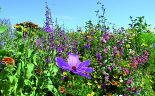 méh, méhecske, méhbarát kert