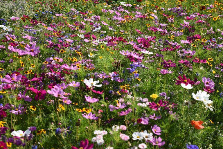 virágos rét méheknek