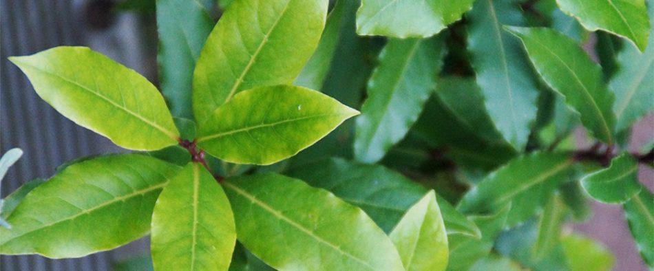 baber-termesztese-nevelese-szaporitasa