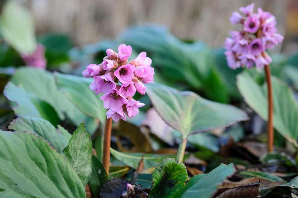 12 terjedő tövű talajtakaró növény árnyékos kertrészekbe