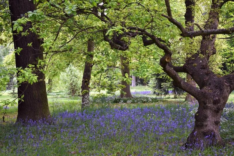 angol kékcsengő mező