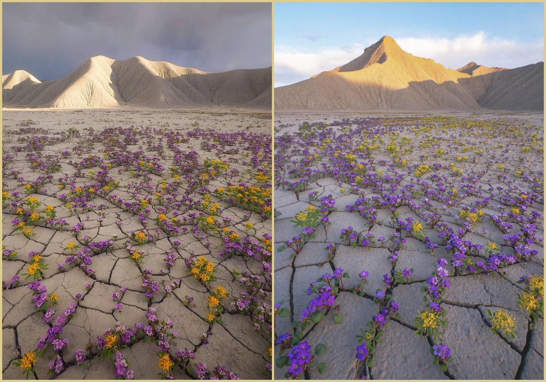 Szupervirágzás az amerikai Utah sivatagban