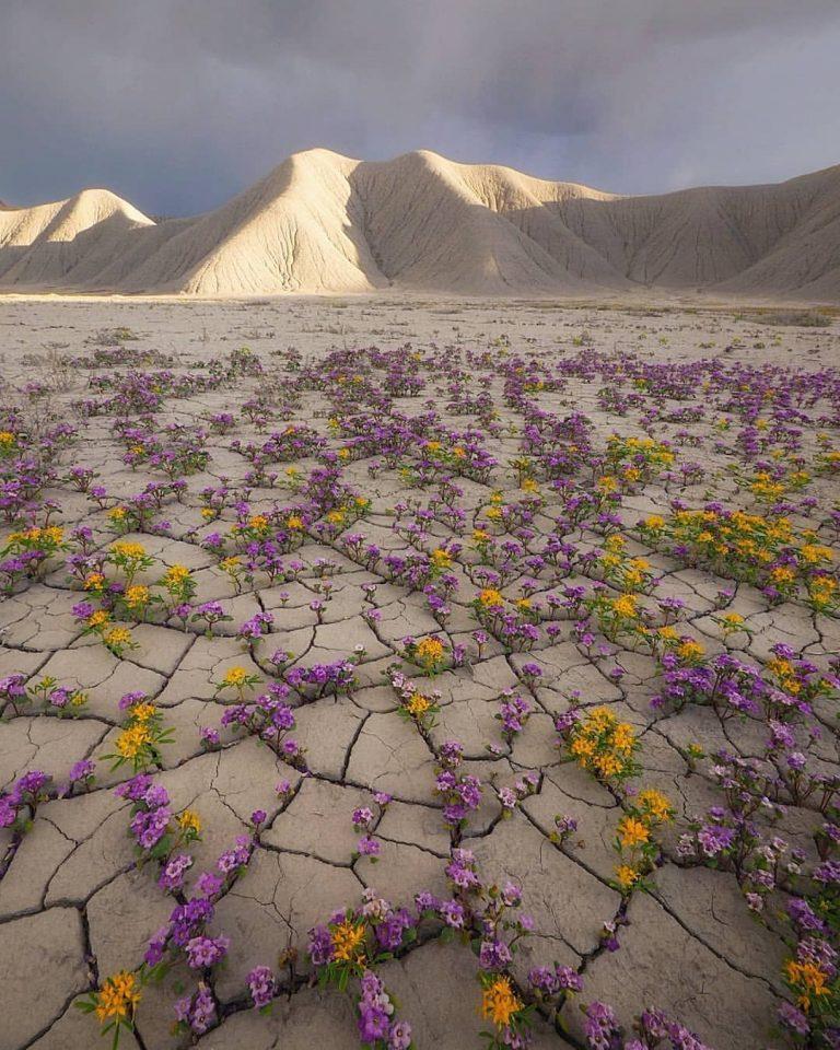 sivatagi-viragok-utah-allamban