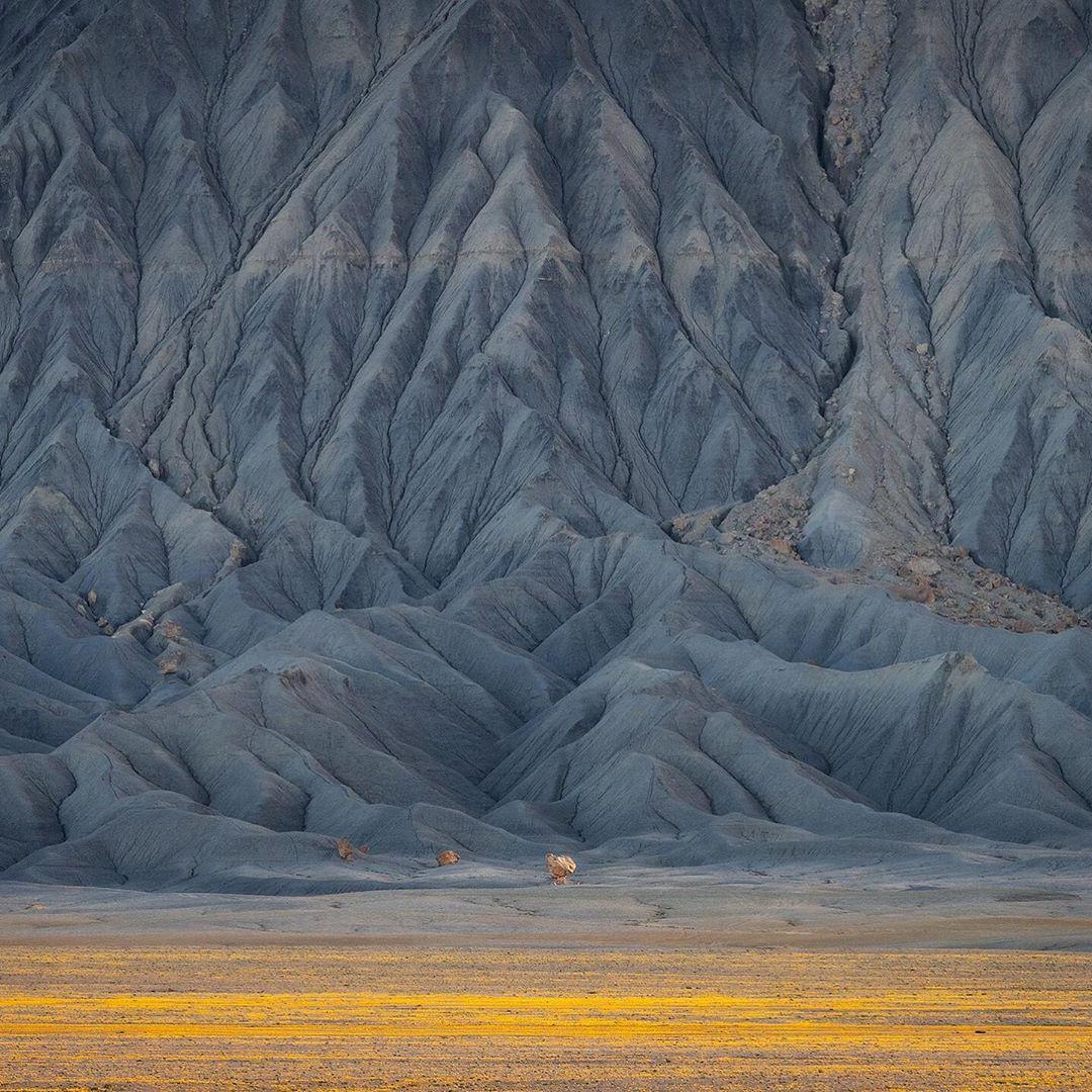 viragzo-sivatag-utah