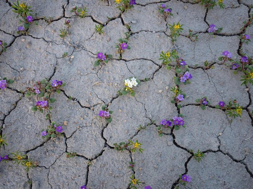 viragzo-sivatag-utah-allamban