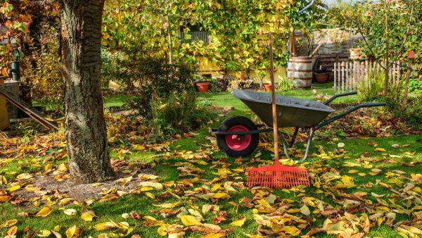 őszi kertészkedés