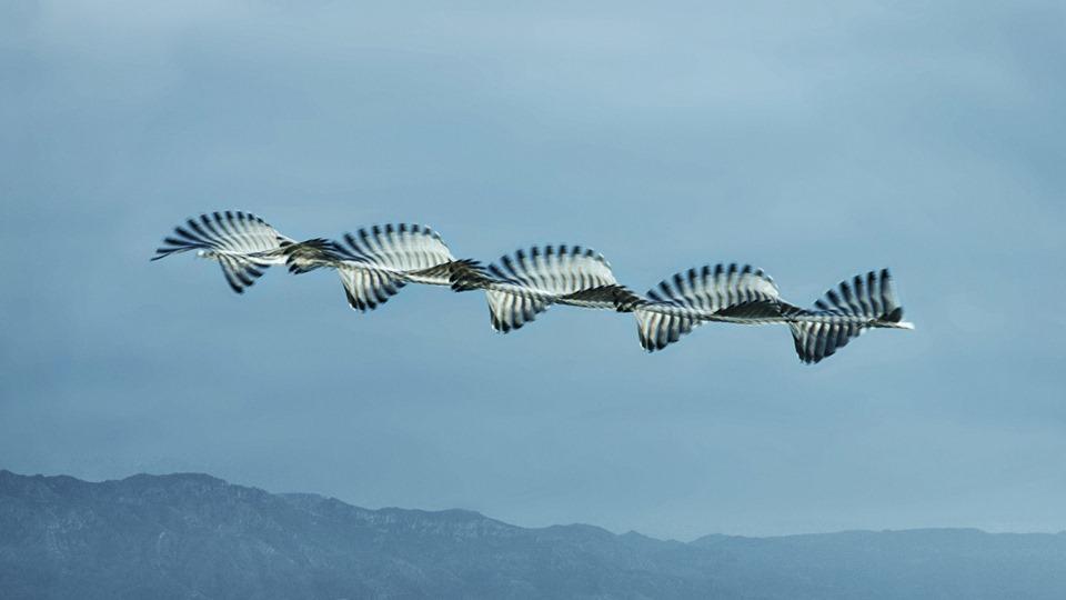 madarak röppályája fotón