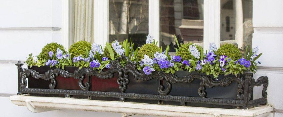 téli balkonláda növények