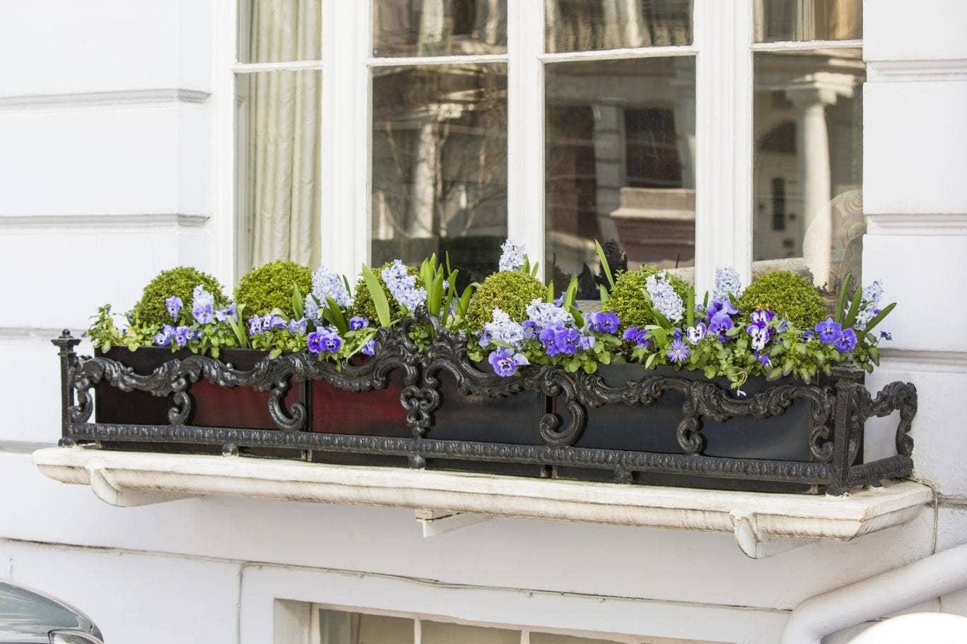 3 fagytűrő növény, amik télen is díszíthetik a balkonod