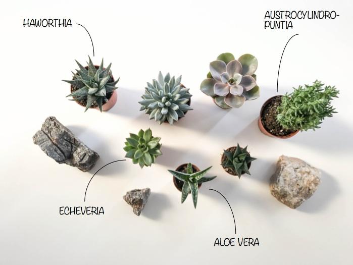 terrarium-novenyei