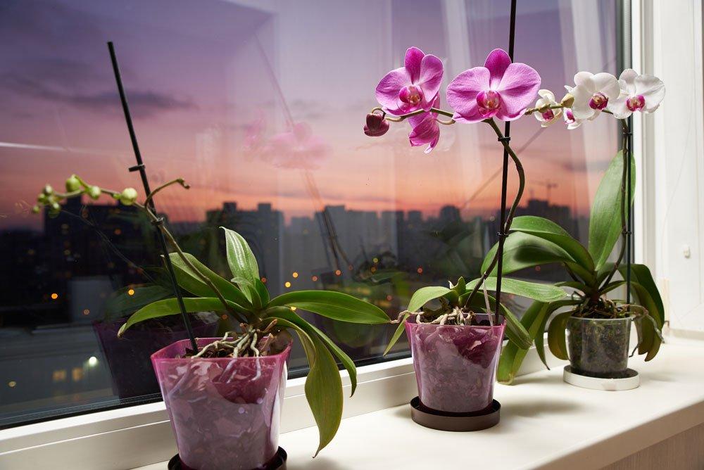Az orchidea tartása - az alapok