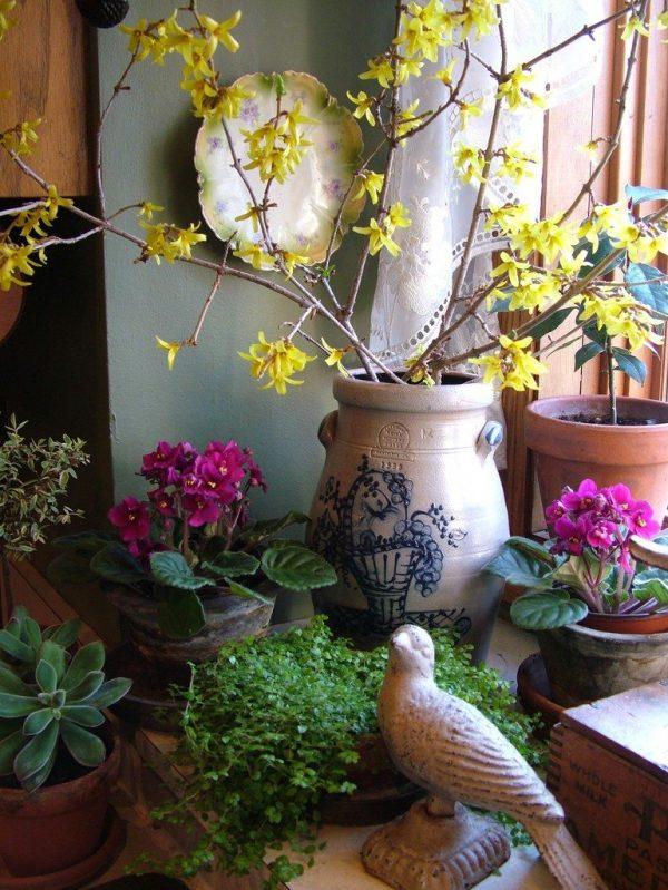 tavaszi-novenyek-hajtatasa-lakasban