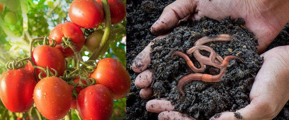 zoldhulladek-talaj-permakulturas-kert